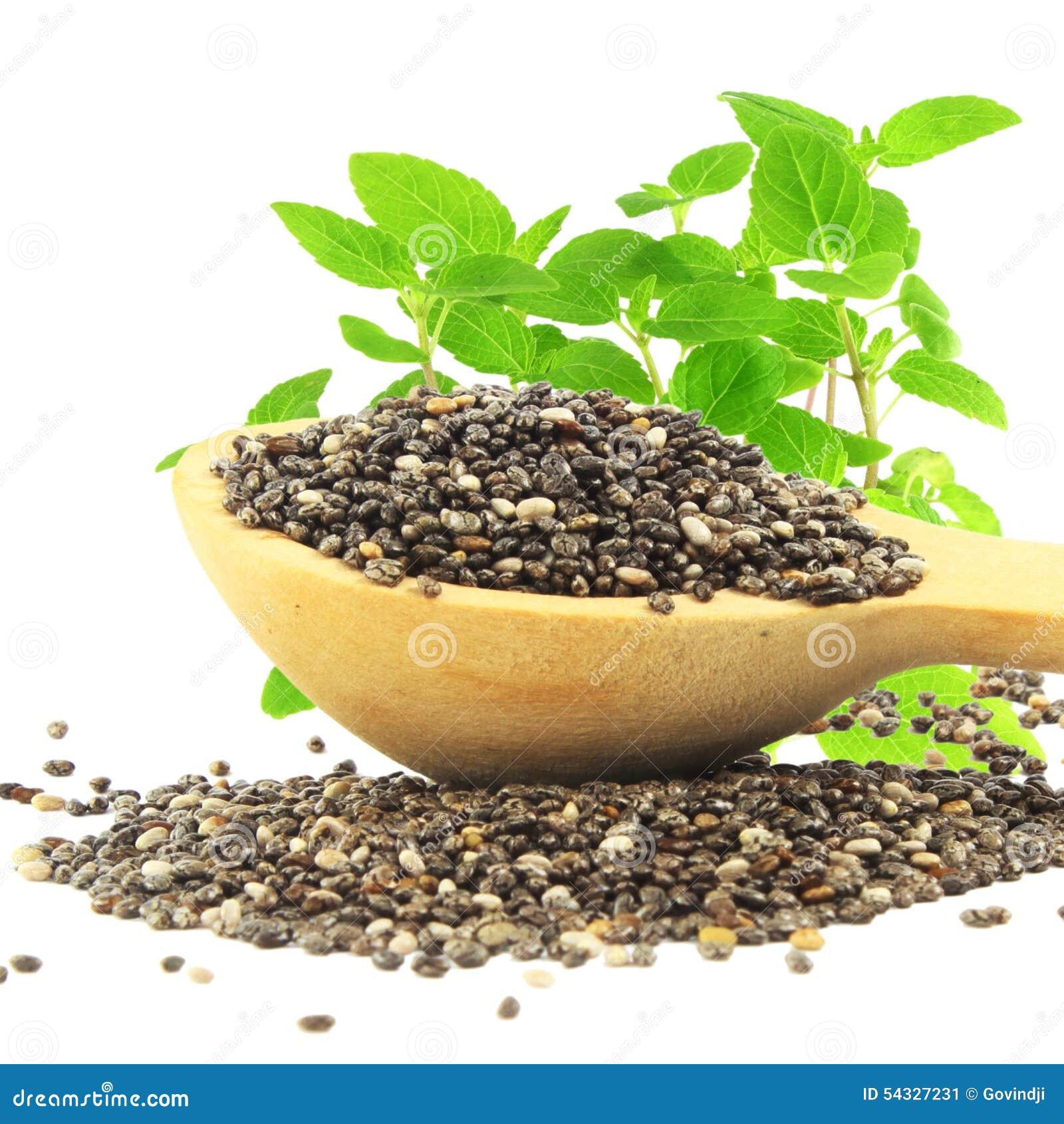 Semilla de chia en cuchara de madera con la planta del for Plantar hortensias semillas