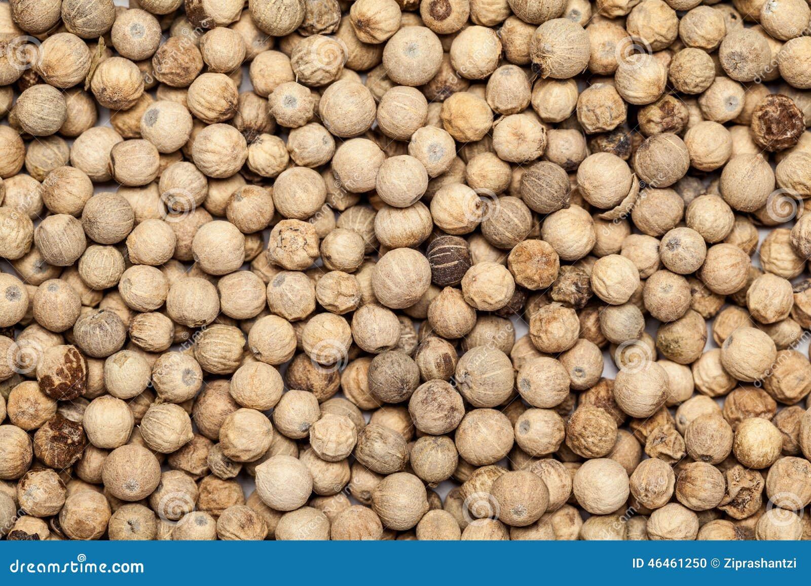 semilla de teca