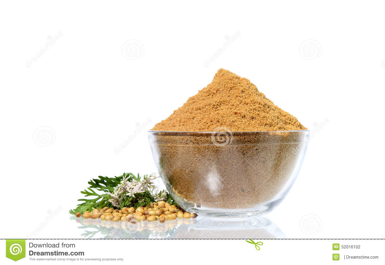 Semillas de coriandro, coriandro fresco y coriandro pulverizado