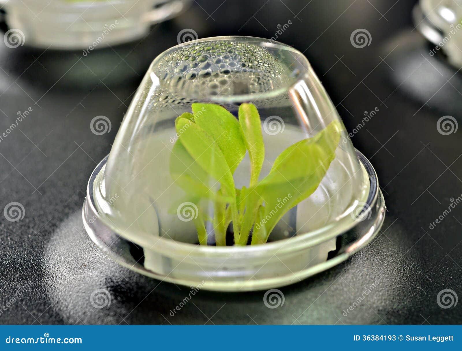 Semillas que crecen en un terrario del arrancador