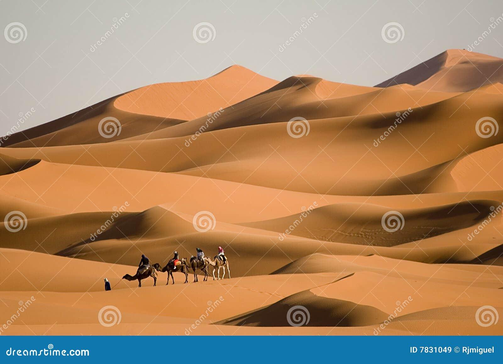 Senderismo del camello