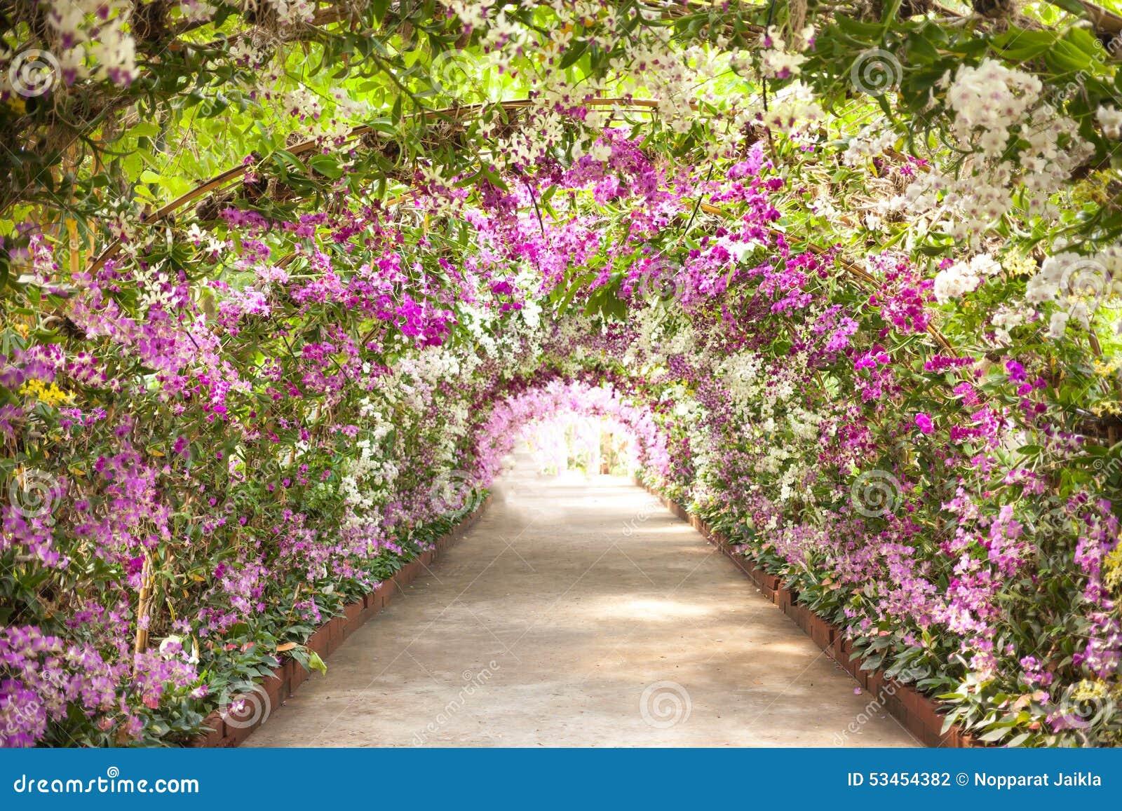 Orquideas jardin for Plantas de un jardin botanico