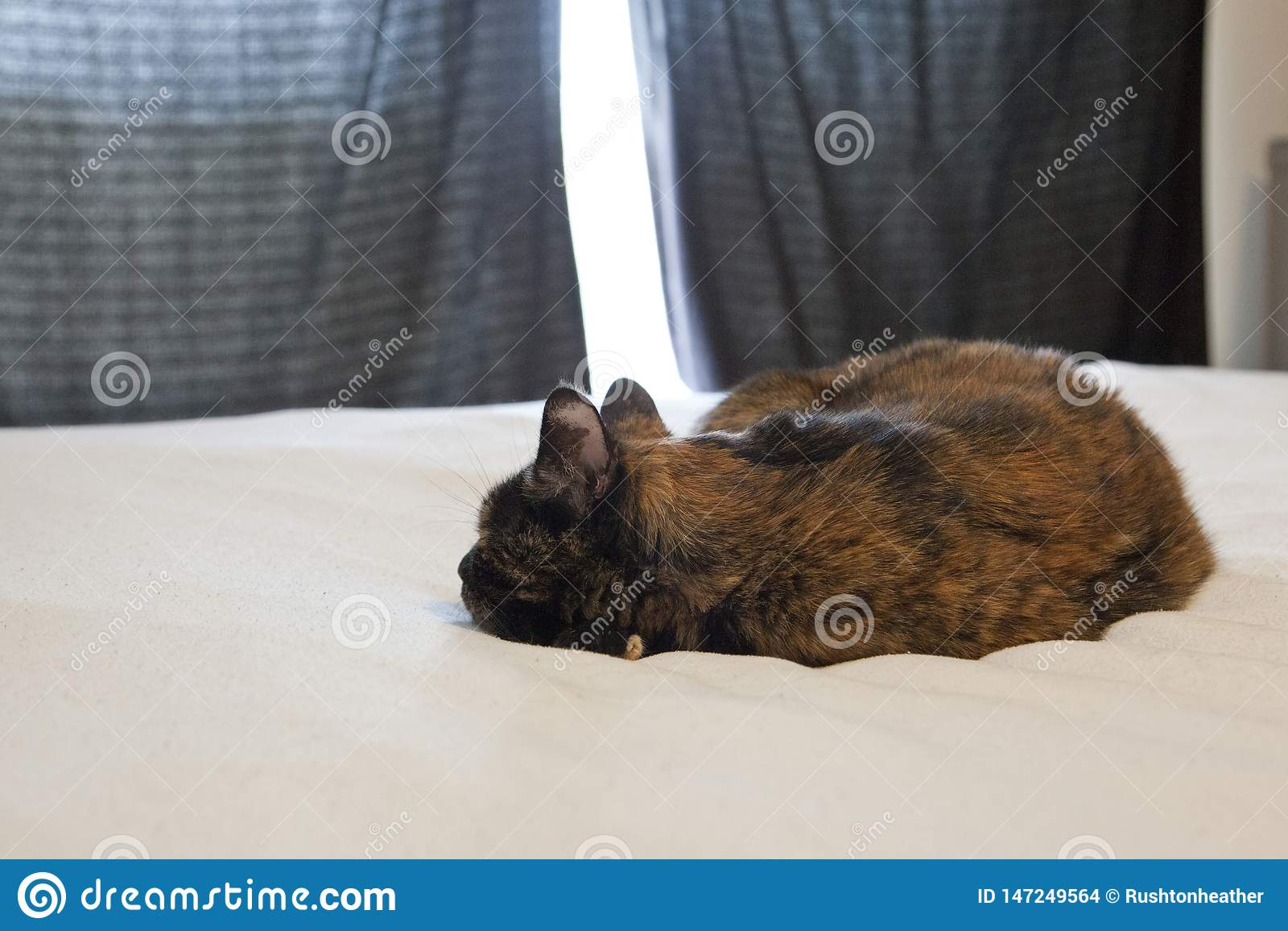 Sendo ignorado pelo gato