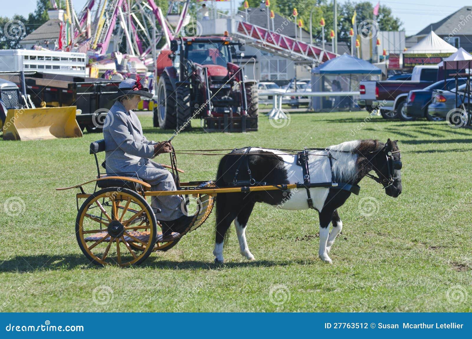 Senhora no Buggy com o cavalo diminuto no país justo