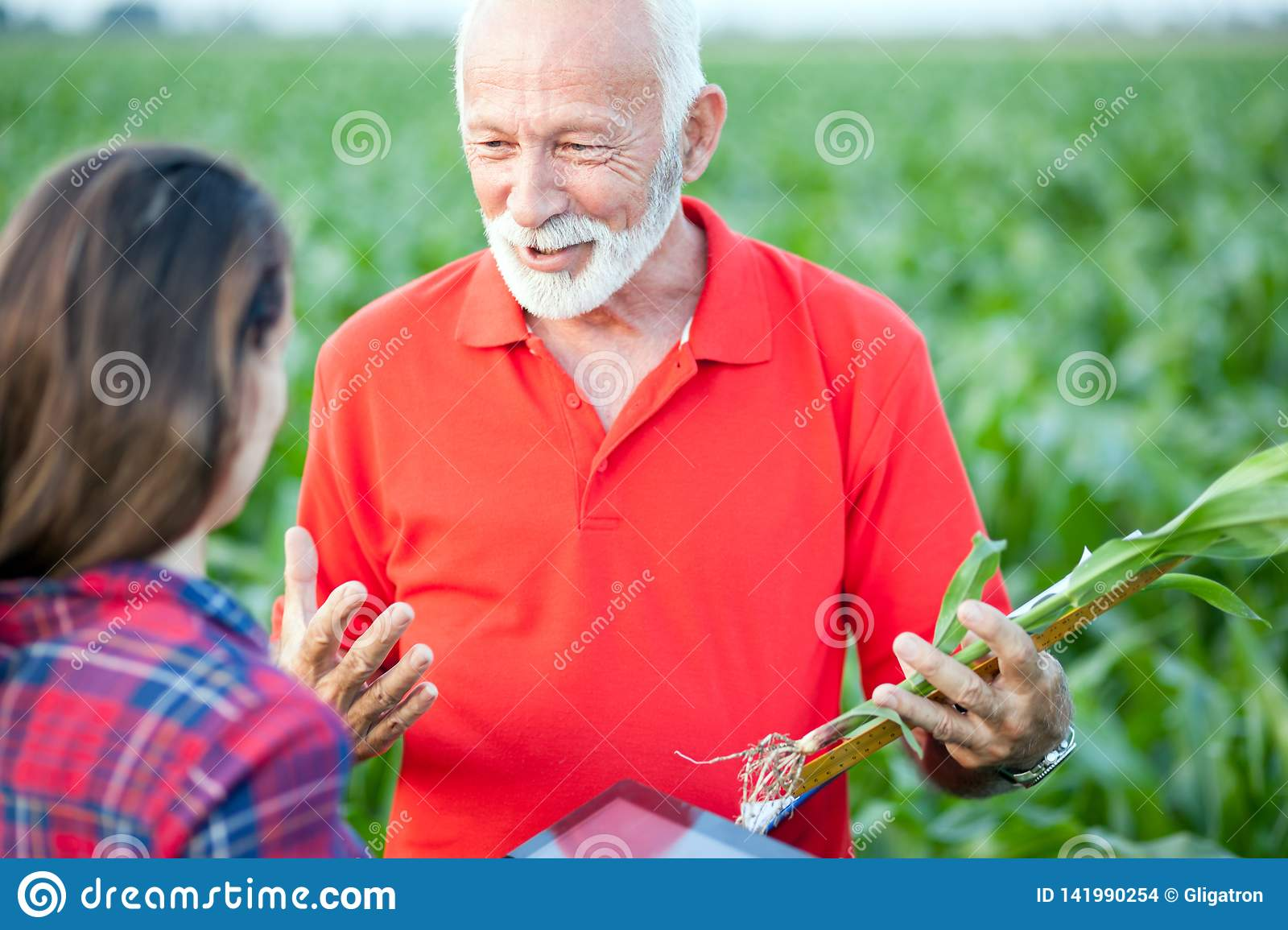Senior agronomist talking to his young female colleague in a corn field