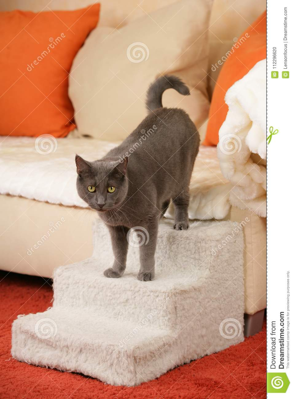 Download Senior Cat On A Cat Staircase Stock Photo   Image Of Disabled,  Walking:
