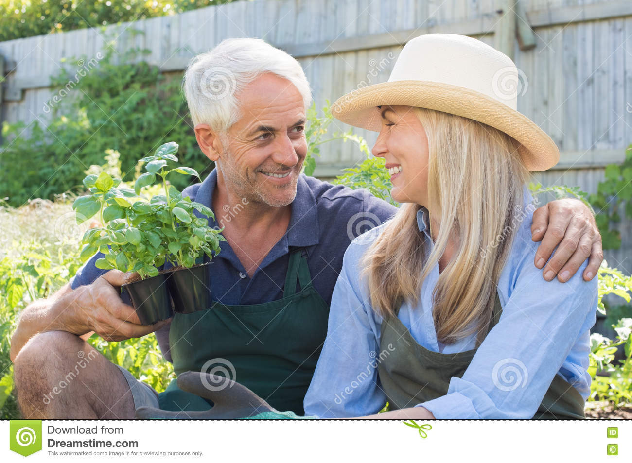 Smiling mature couple gardening together. Senior couple wearing straw hat  and planting basil in the garden. Man hugging his women in the garden. 52b4131c511