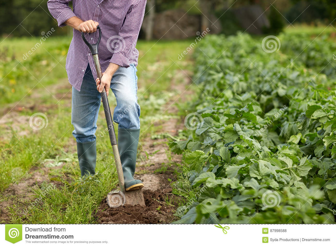 Man digging in vegetable garden stock image for Digging ground dream meaning