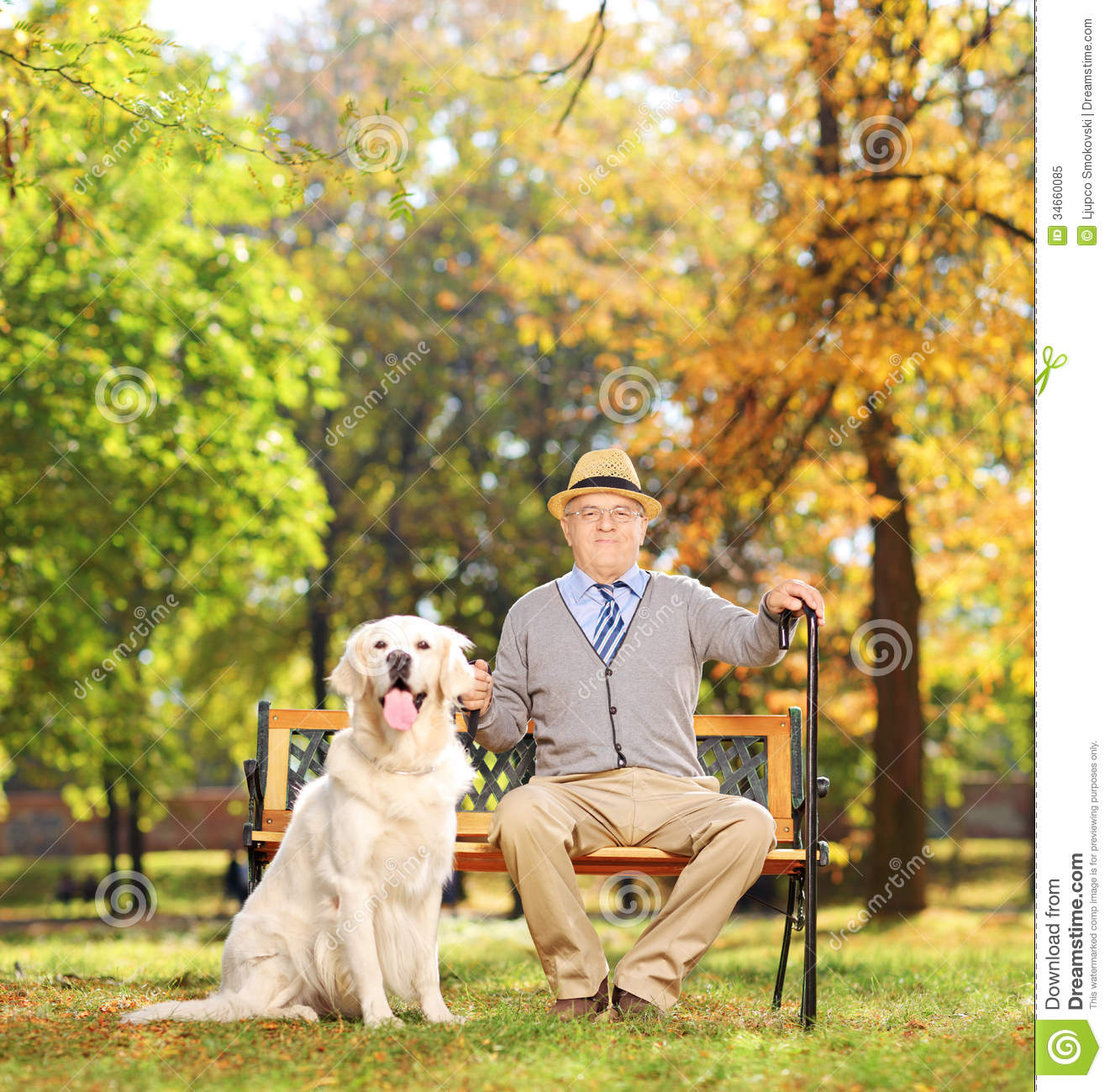 man sitting on a wooden bench with his labrador retriever, in a park ...