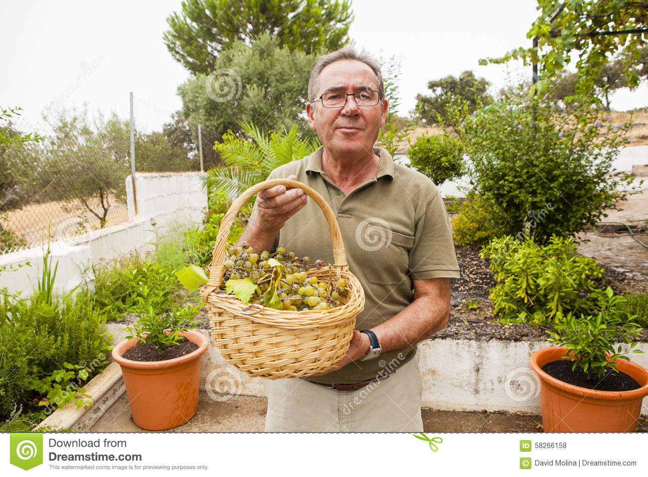 Senior man with a white grapes basket in the hands.