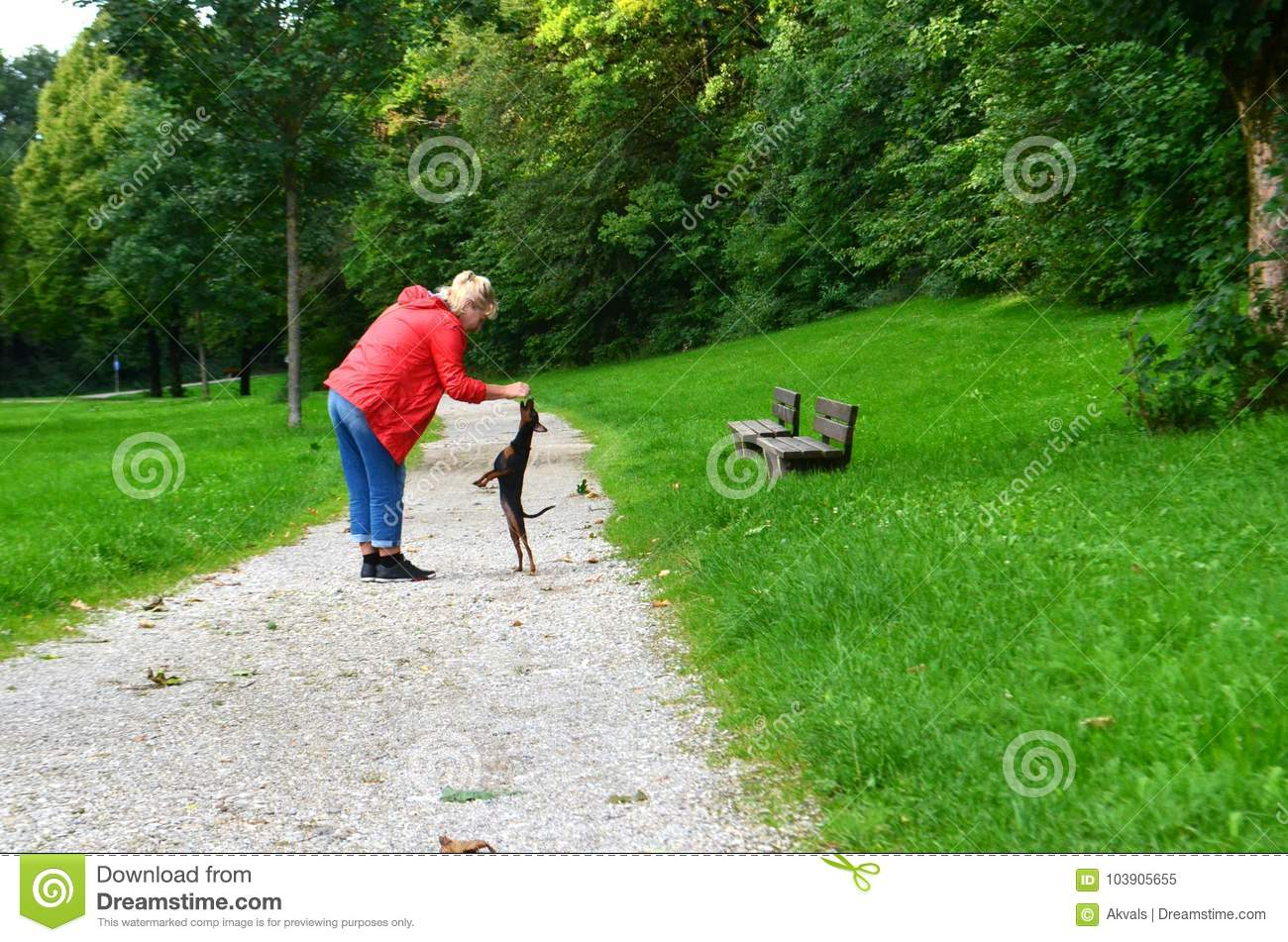 A 60+ Senior Woman Walking Her Pet Dog In A City Park And