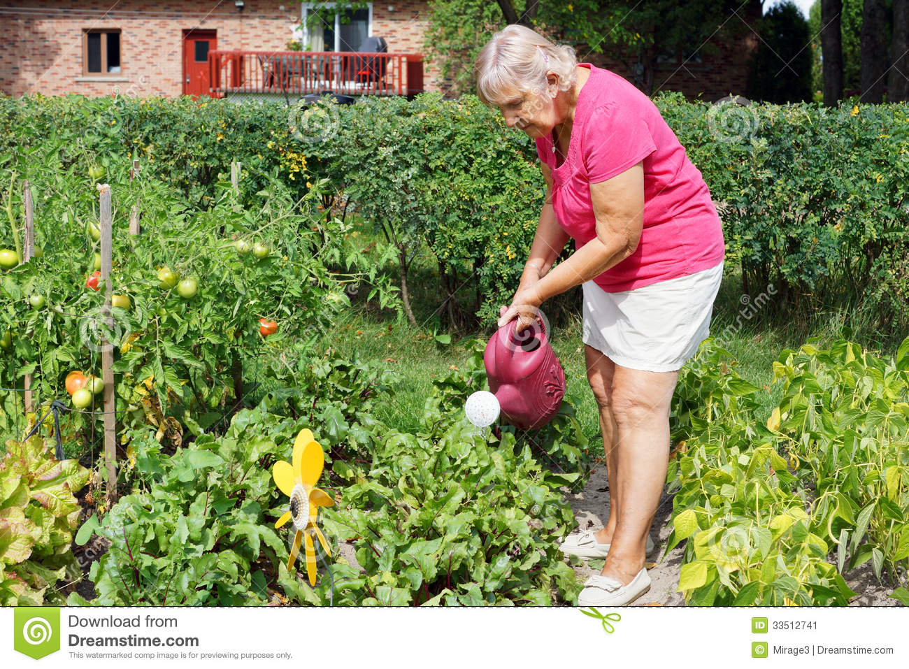Senior Woman Watering Garden Stock Image Image 33512741