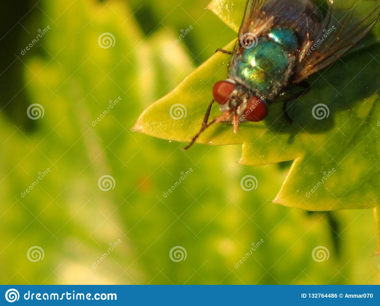 Sens vert de feuille d insecte