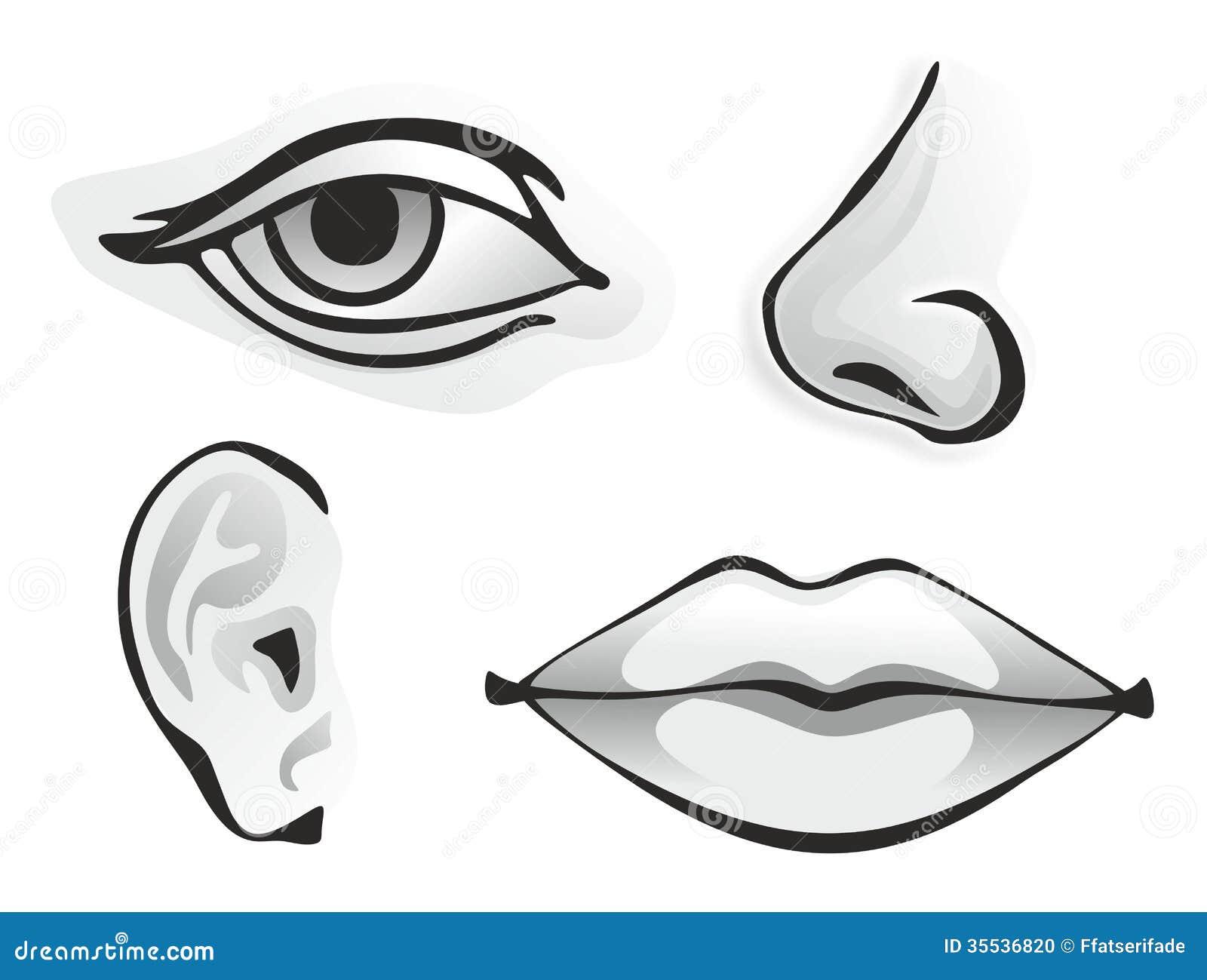 Sense organs stock photo. Image of feel, taste, nose - 35536820