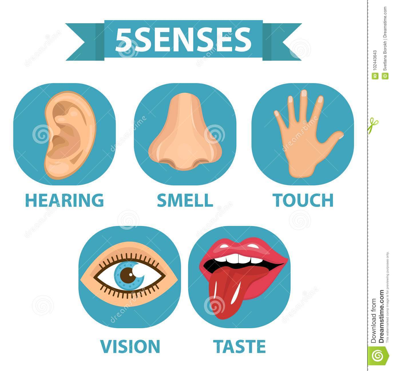 5 senses icon set. Touch, smell, hearing, vision, taste. Isolated on white background. Vector illustration.