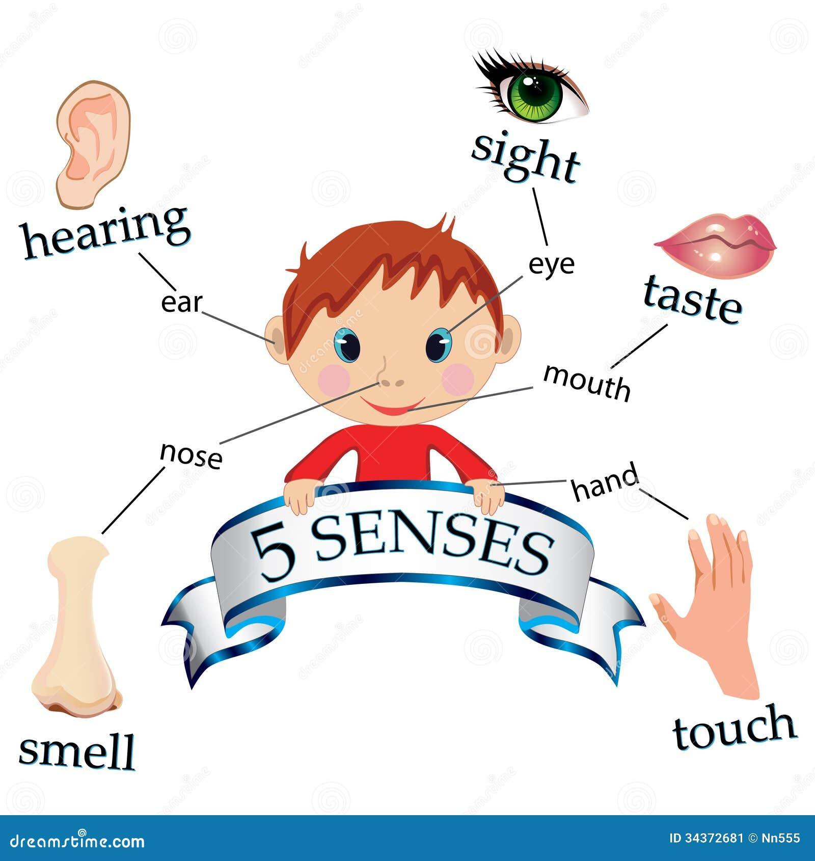 5 sensi