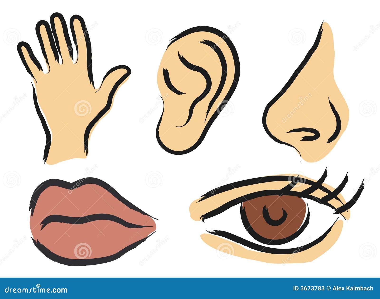 sensory perception stock vector illustration of listen 3673783