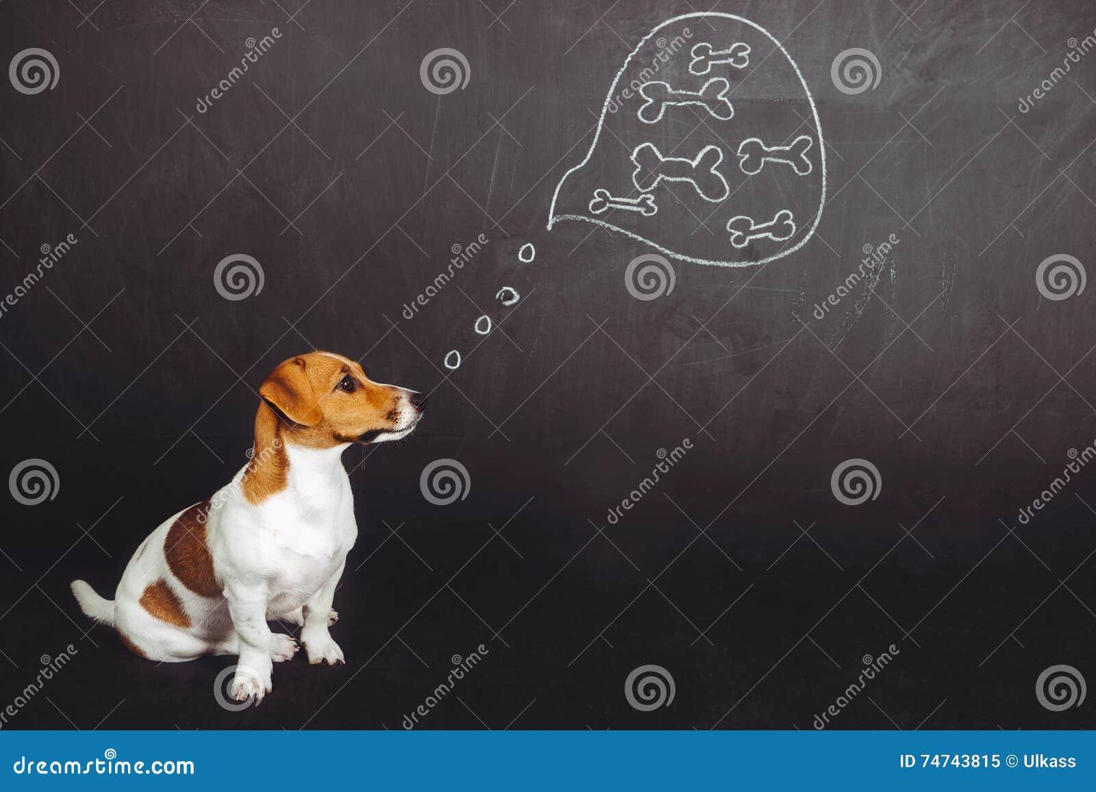 Sentada del perro de perrito y sueño con la comida natural en un bubb del pensamiento