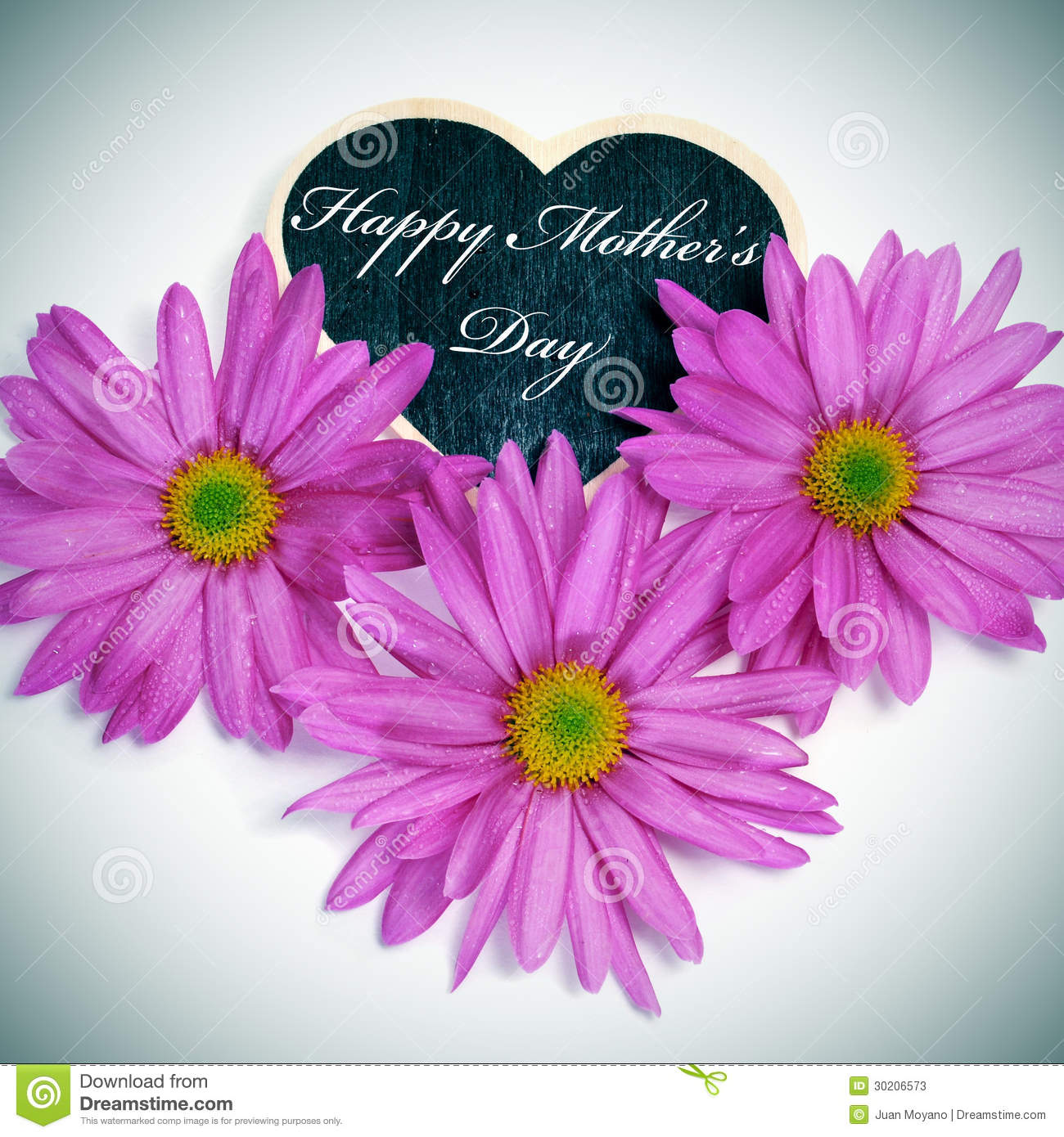 Chrysanthemums Flowers In Heart Shape Stock Photography ...