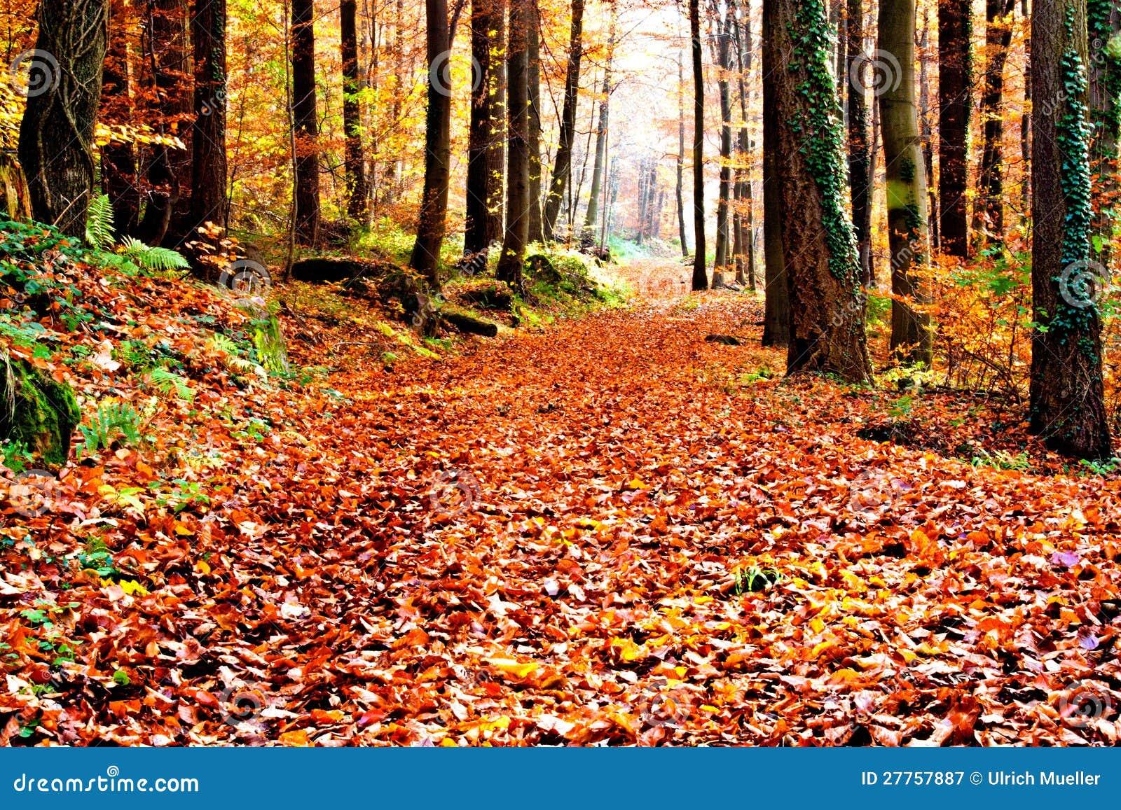 Sentier piéton d automne
