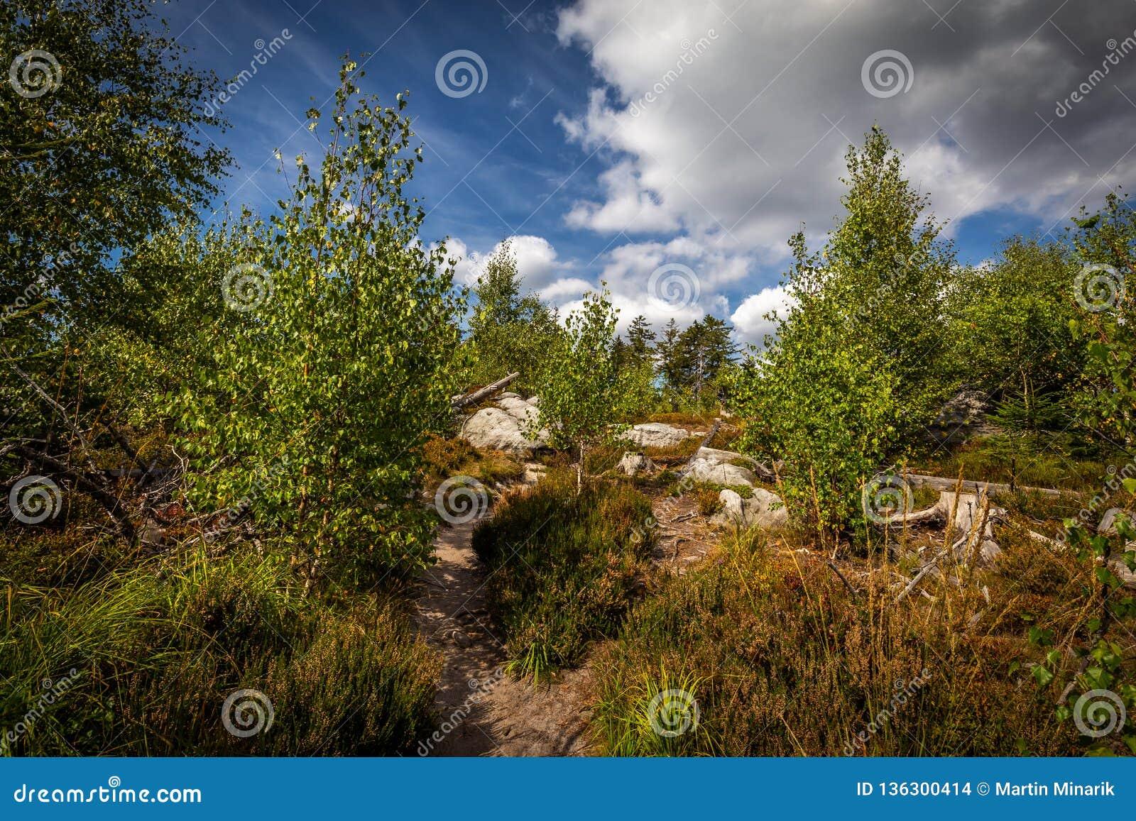 Sentier piéton de Sandy, dans la forêt verte avec le ciel nuageux bleu dramatique