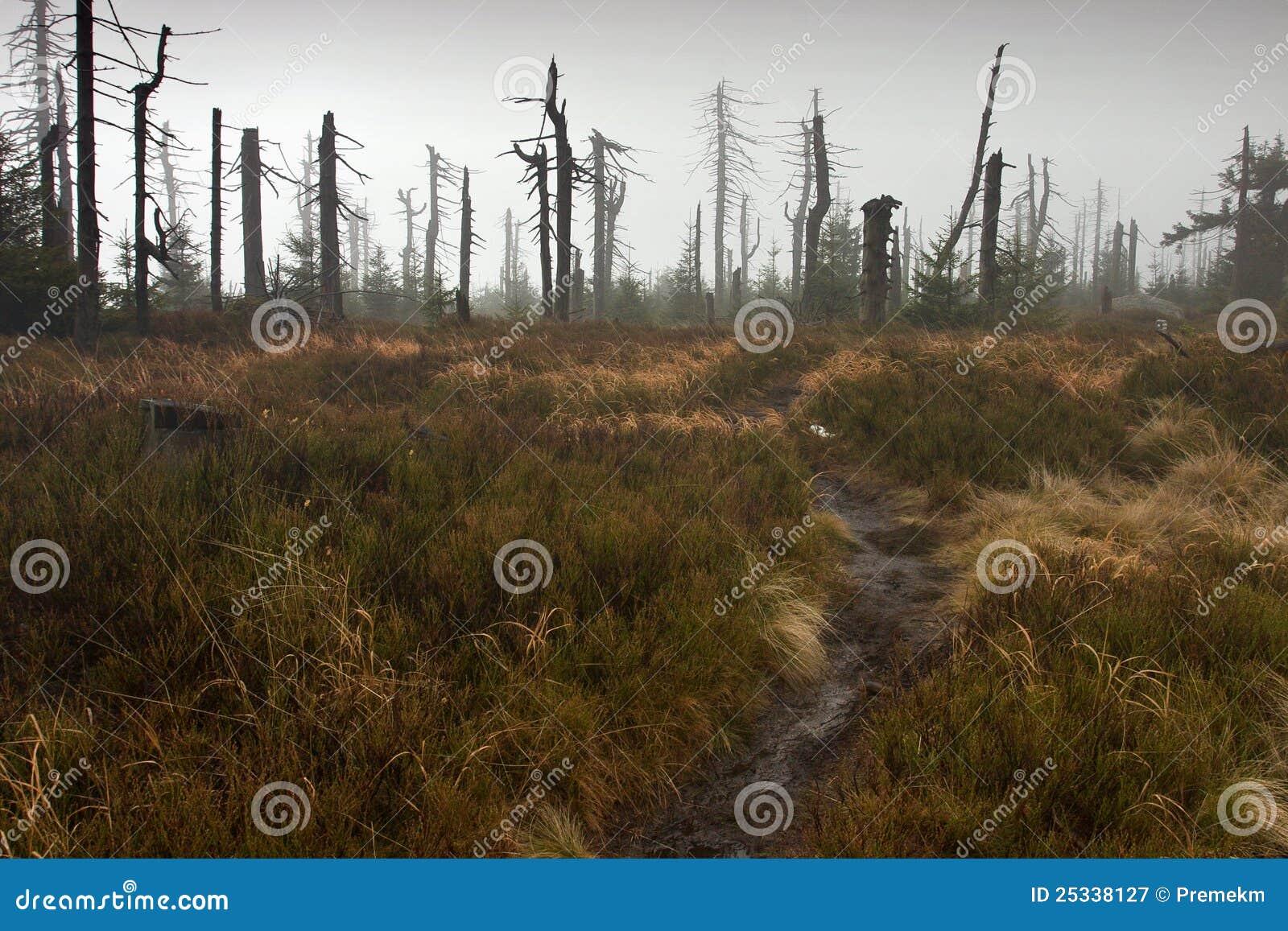 Sentier piéton menant à la forêt brumeuse morte