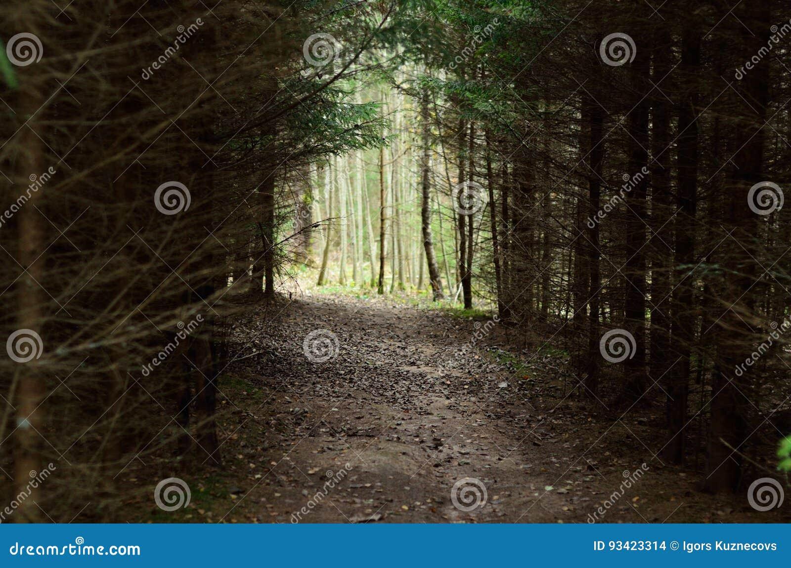 Sentier piéton par la forêt dense