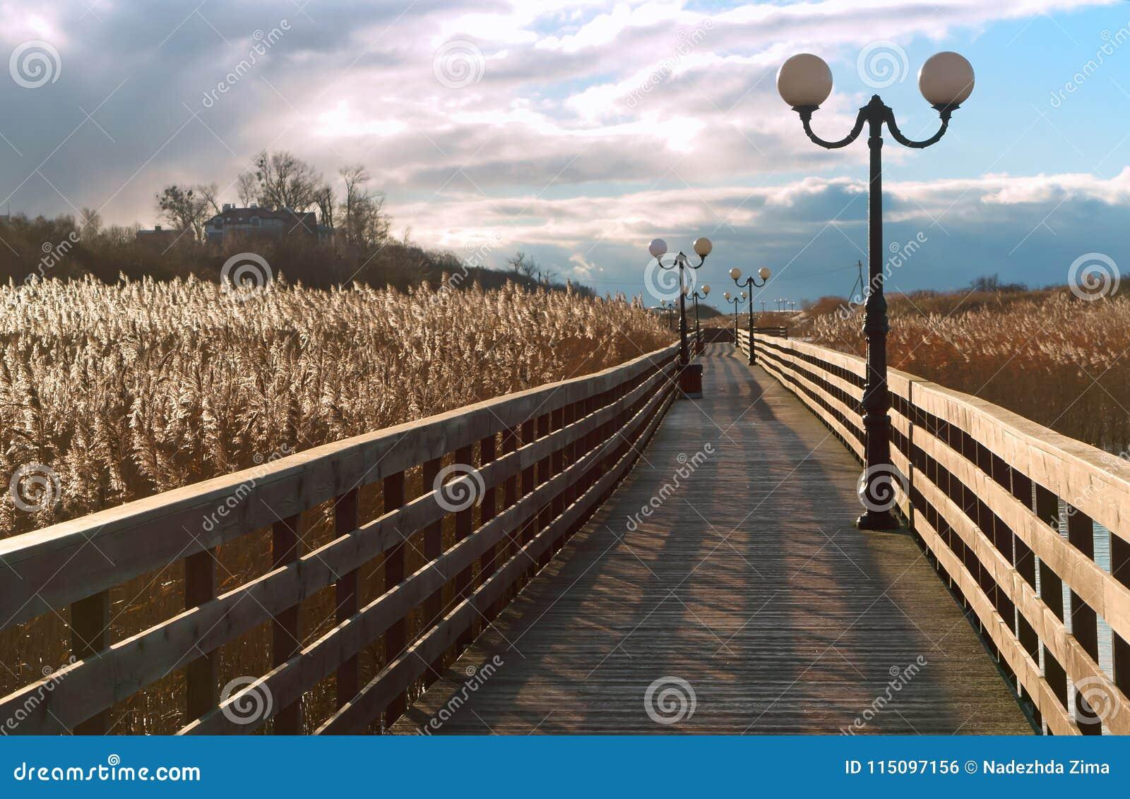 Sentiero costiero di legno attraverso le canne alla luce solare, una passeggiata di legno della plancia con i pali della luce