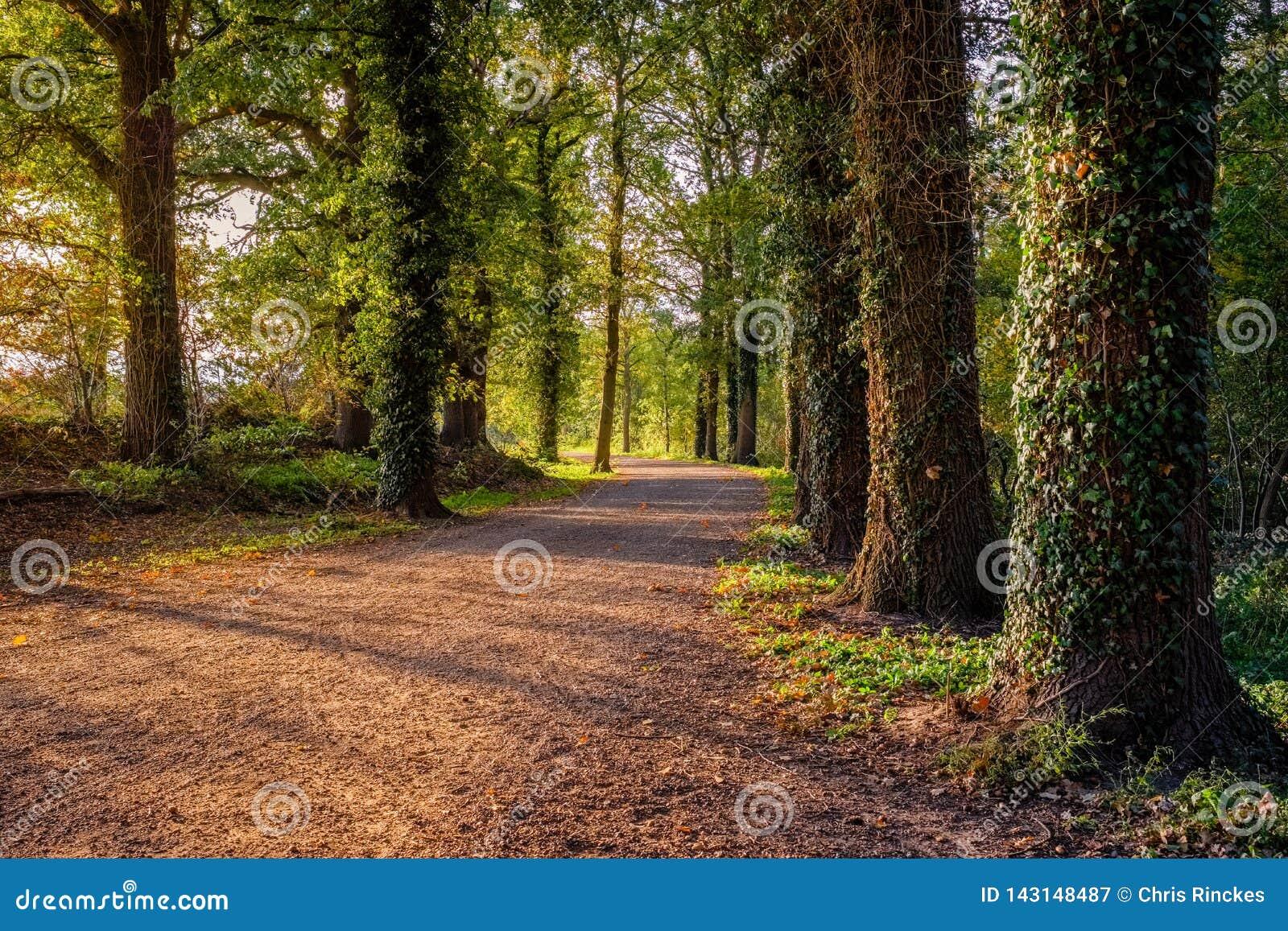 Sentiero nel bosco su un pomeriggio soleggiato Almelo, Paesi Bassi di ottobre
