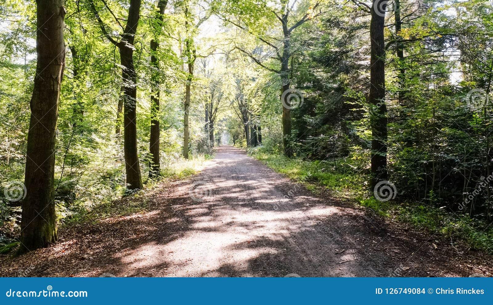 Sentiero nel bosco su un pomeriggio soleggiato Almelo, Paesi Bassi di settembre
