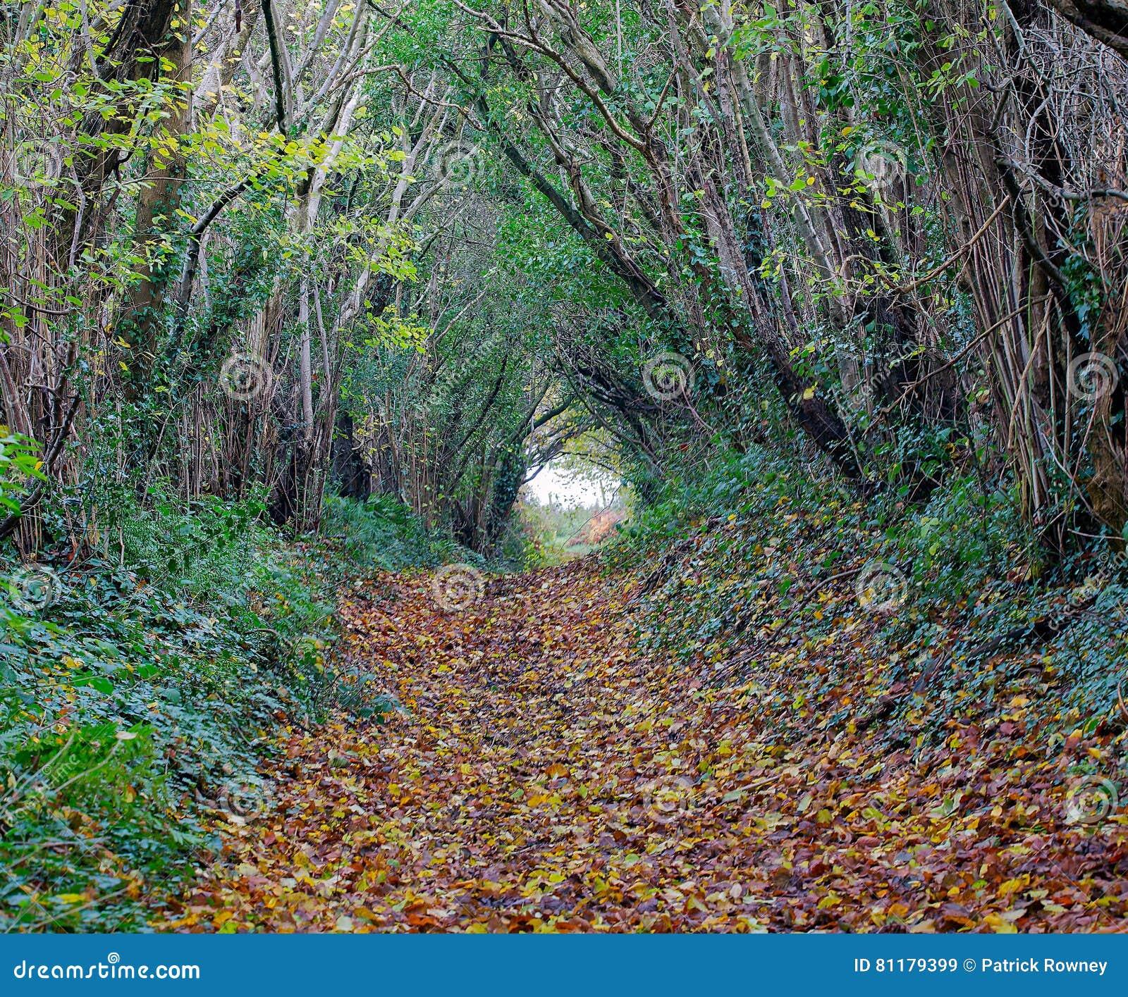 Sentiero per pedoni del terreno boscoso di autunno