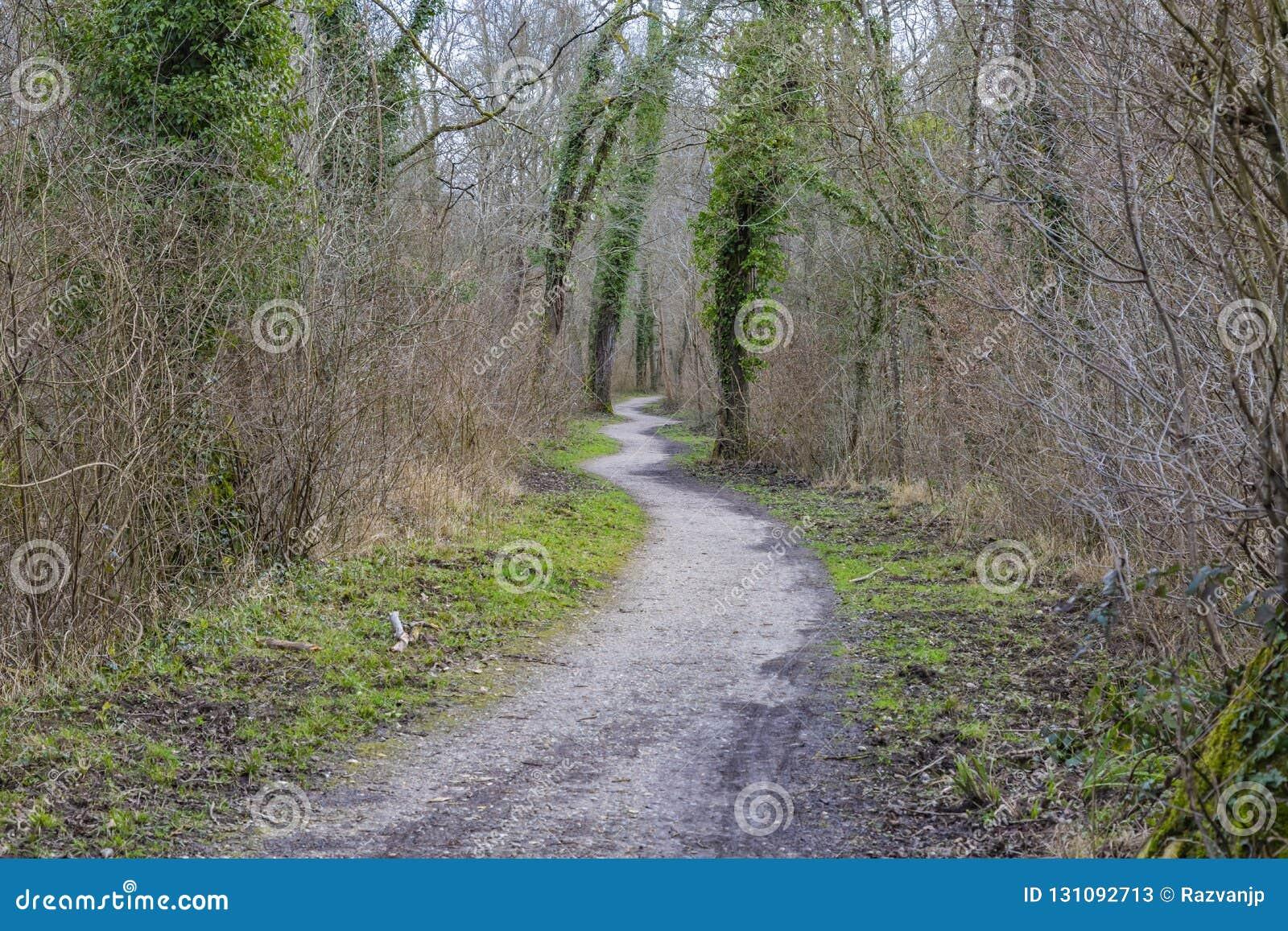 Sentiero per pedoni in una foresta