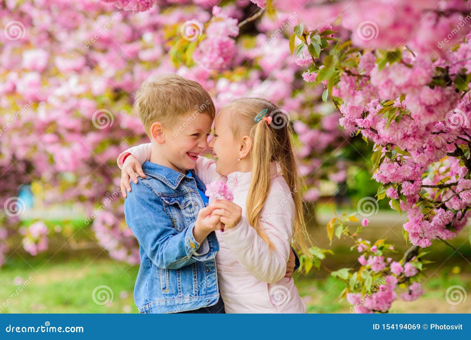 Sentimentos macios do amor Acople crian?as em flores do fundo da ?rvore de sakura A menina aprecia flores da mola Dando toda