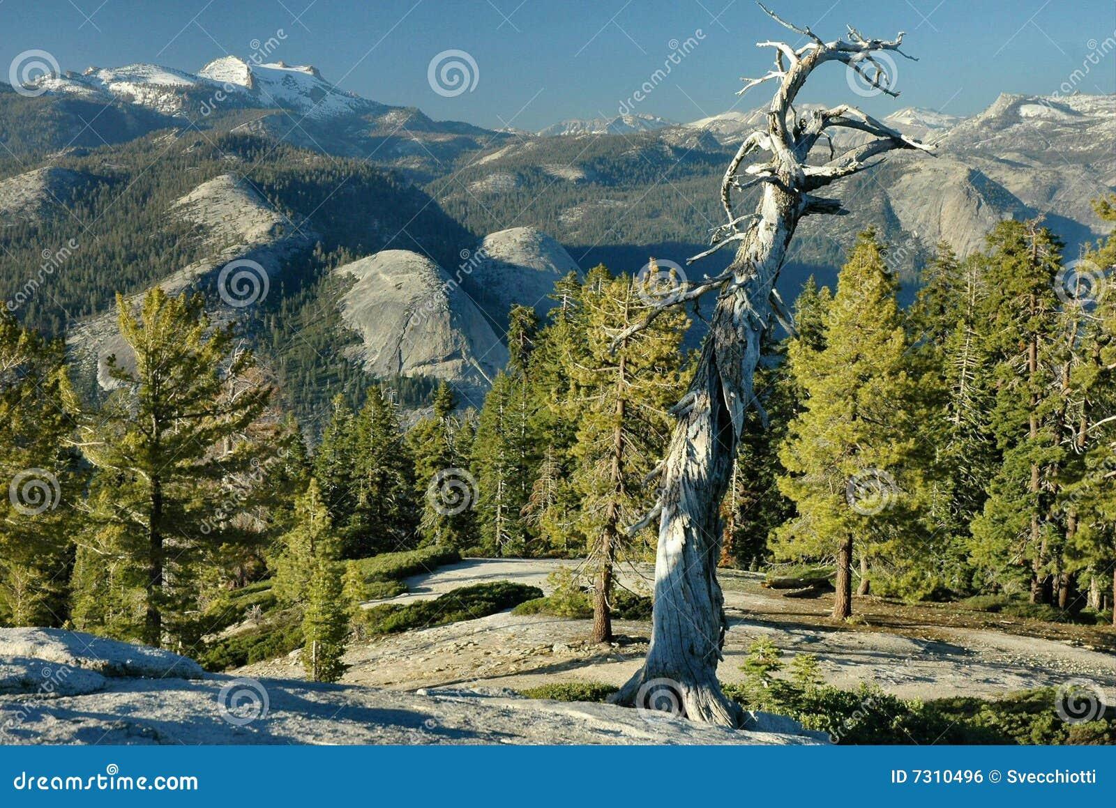 Sentinel Dome Evening, Yosemite