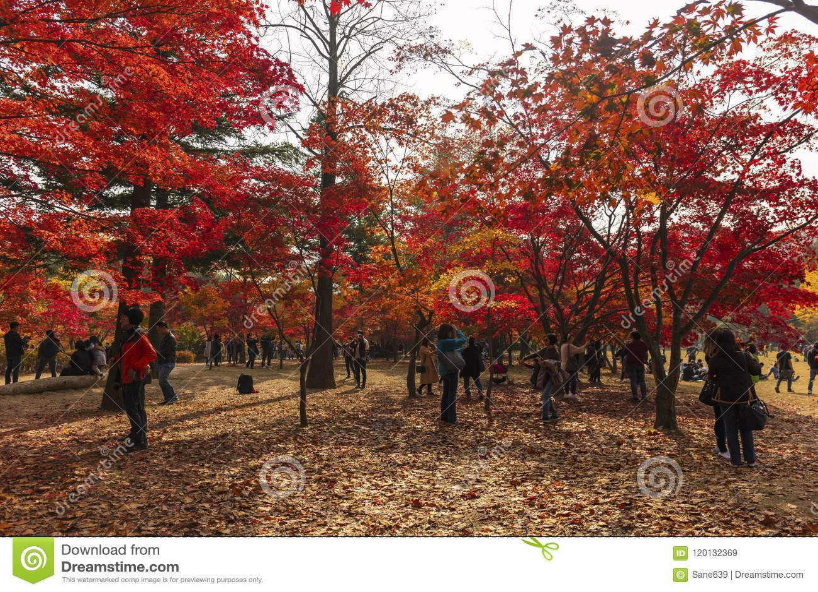 Autumn Of Nami Island In The Morning South Korea Editorial Stock ...