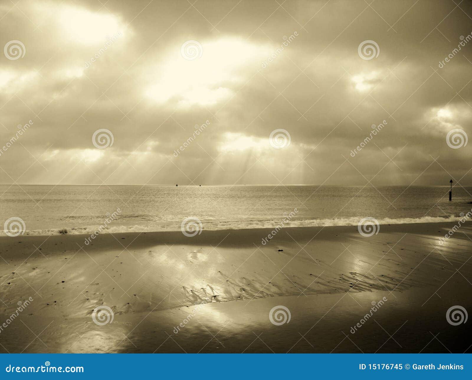 Sepia sandbanks dorset