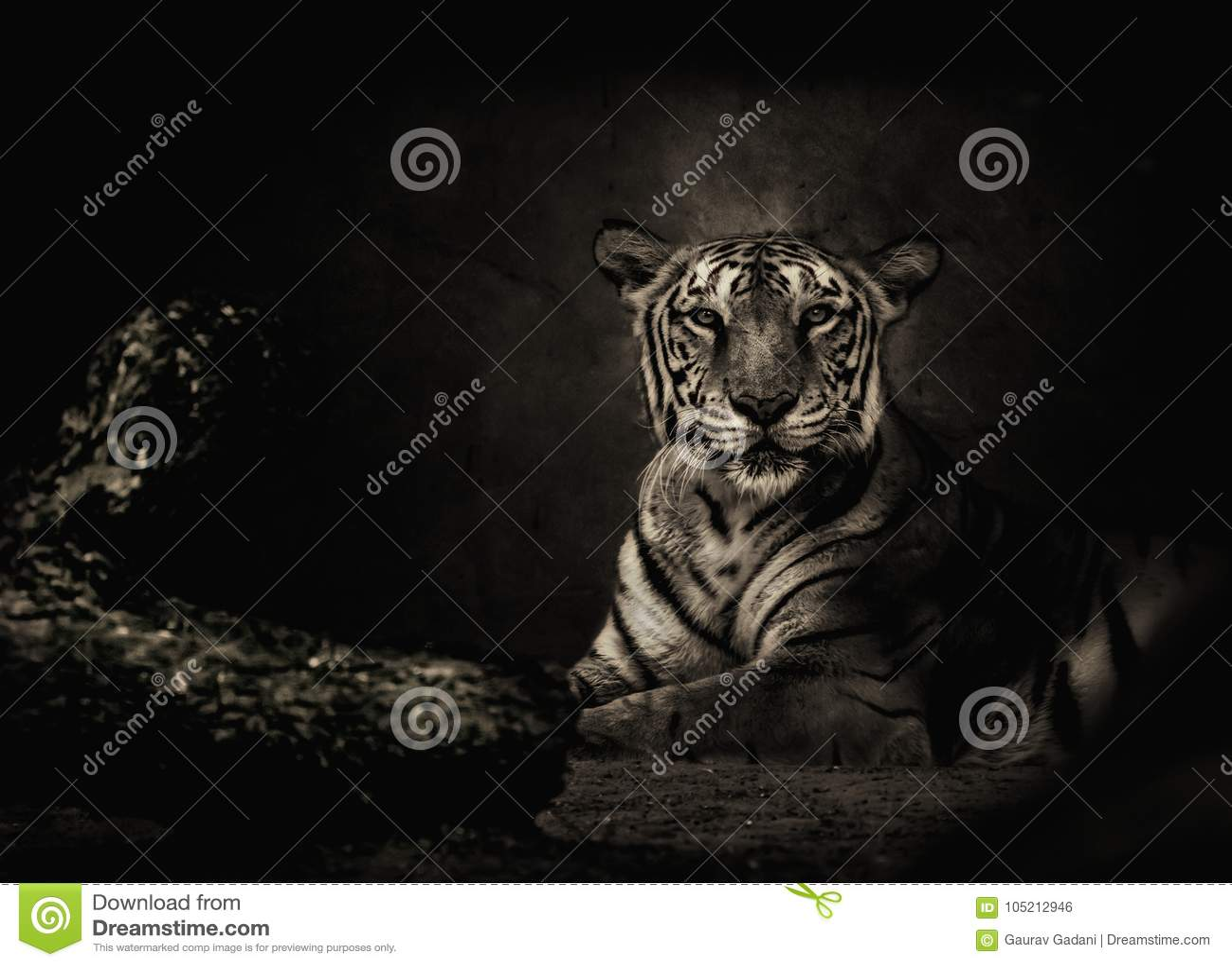 Sepia tonte Bengal-Tiger