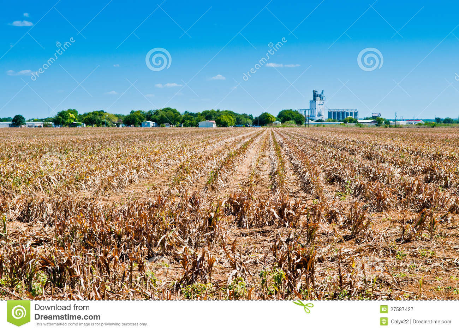 Sequía en la granja