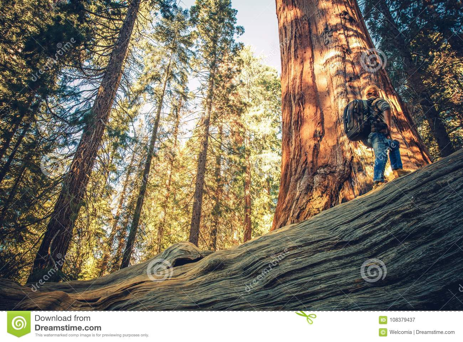 Sequoia Forest Exploring