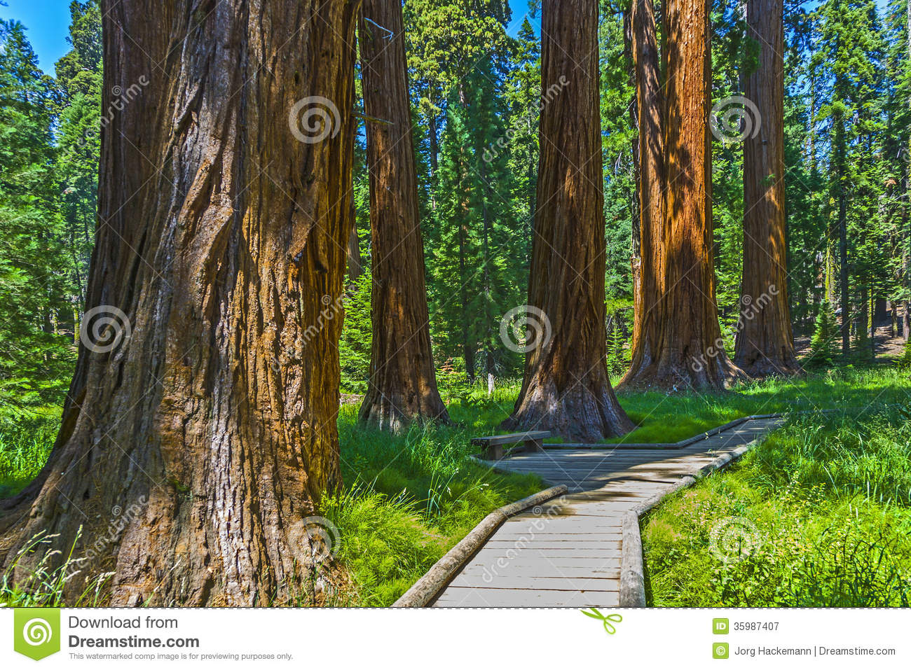 free online personals in sequoia national park Our site is the worlds free online personals and dating service  naked women in sequoia national park california.