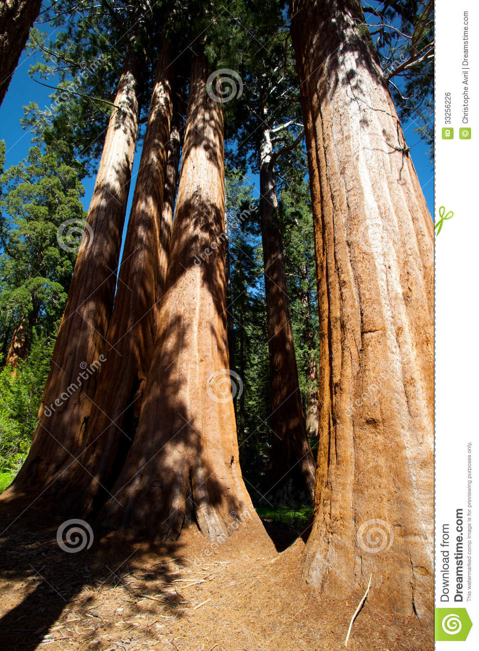 - sequoia-tree-trunk-yosemite-national-park-33256226