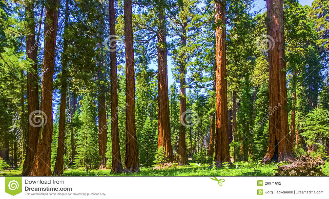 sequoia national park girls Visit the world's largest trees at sequoia, america's second national park kings canyon is also filled with giants, from immense mountains to deep canyons.