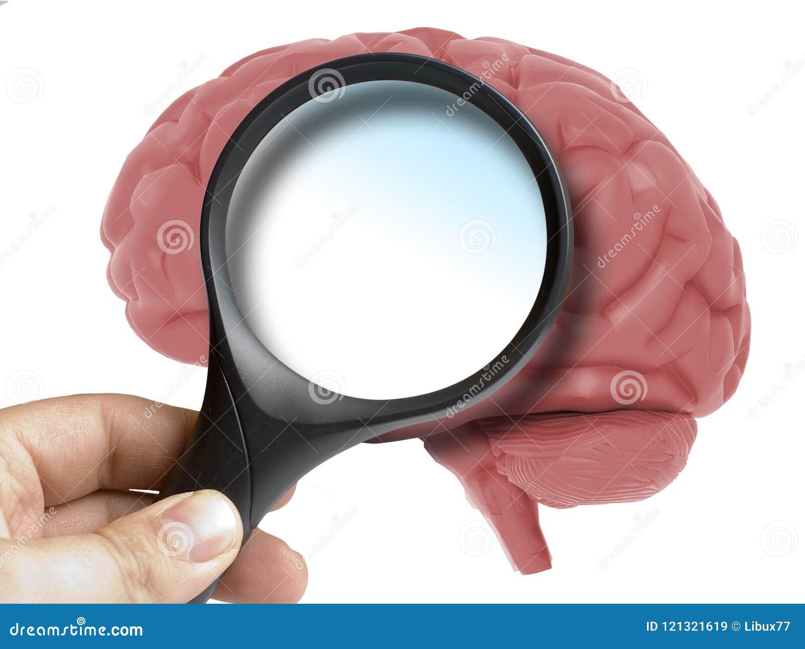 Ser humano Brain Analyzed com espaço da cópia da placa da lupa para dentro