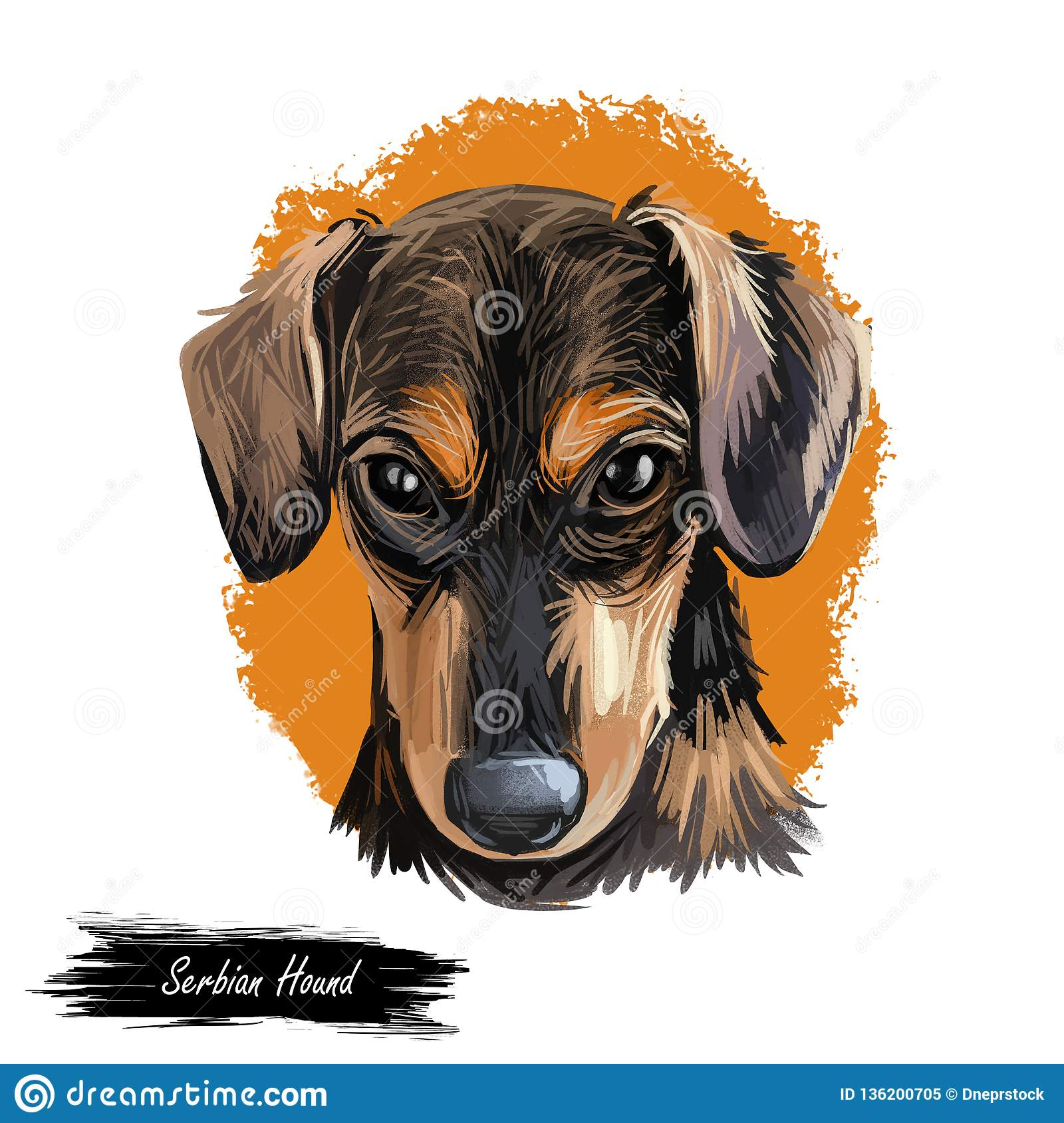 Serbian Hound pet digital art, watercolor hand drawn poritair of canine. Domestic animal from Serbia and Montenegro