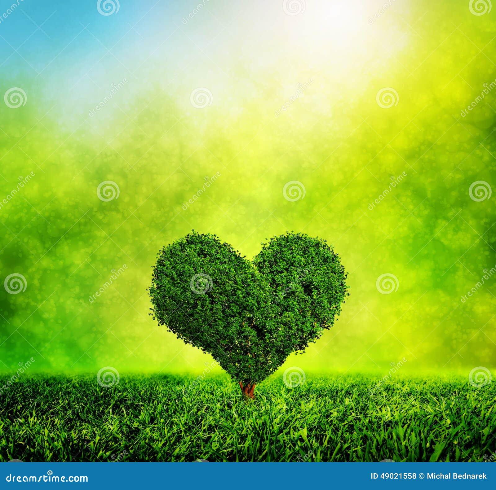 Serca kształtny drzewny dorośnięcie na zielonej trawie Miłość