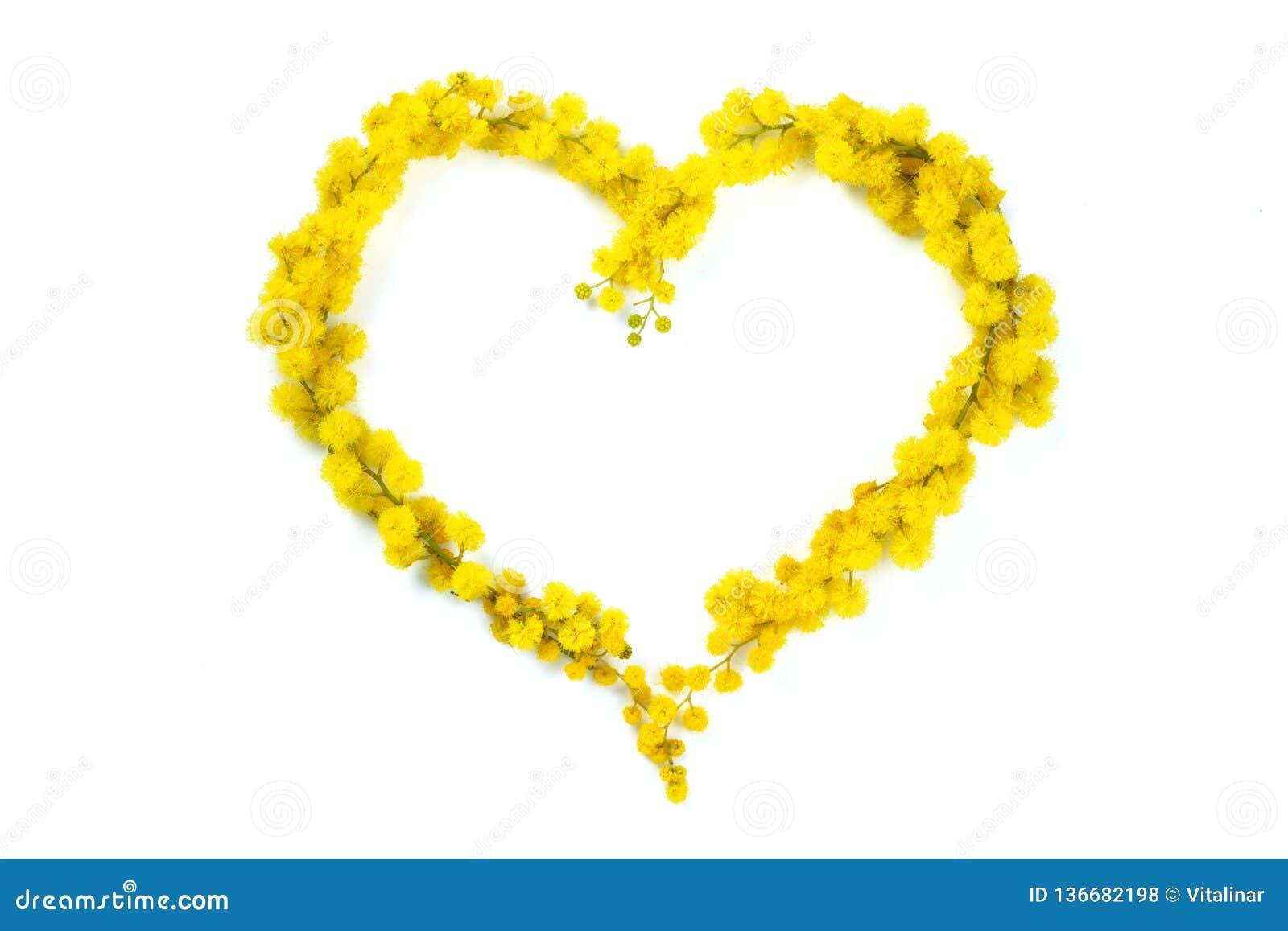 Serce mimoza
