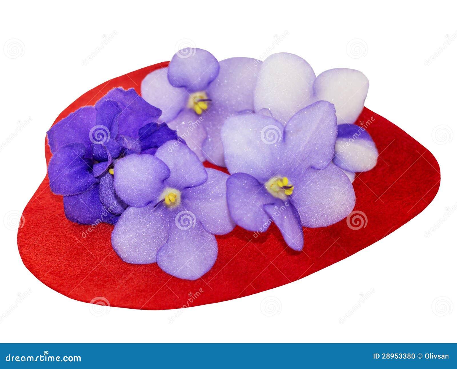 Serce zakrywający naturalni saintpaulia kwiaty