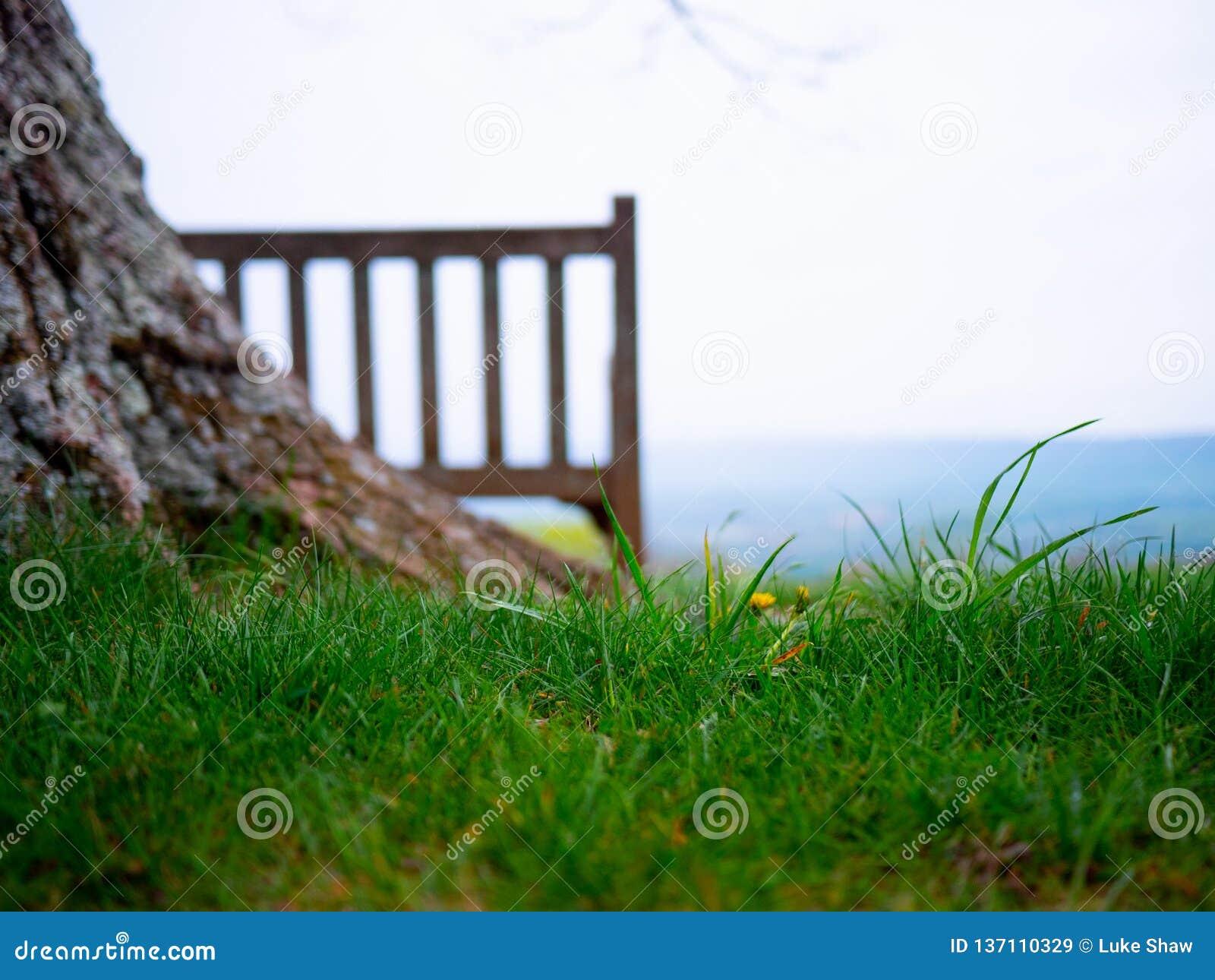Serene Bench Overlooking Valley