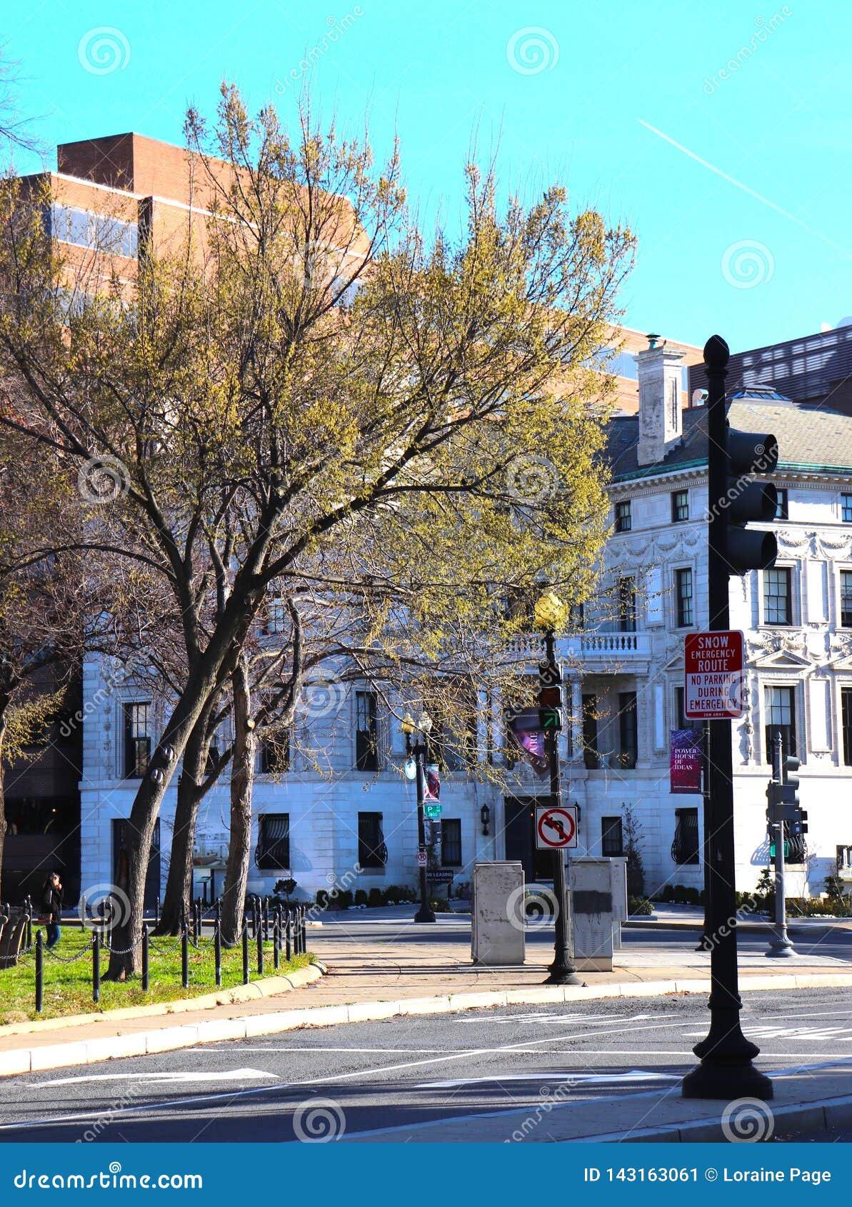 Serene City Corner em uma interseção, folhas novas em árvores