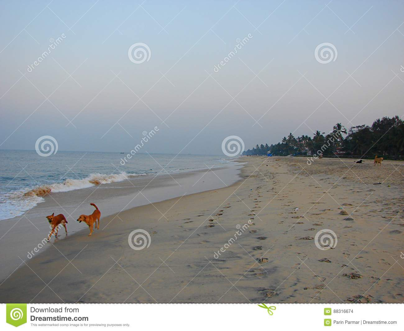 Serene Lonely Beach With Barking Dogs In Early Morning